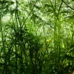 jungle1_small