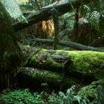jungle3 small